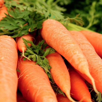 C like Carrot essential oil (Daucus carota)